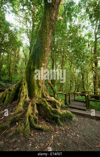 Backyard Jungle Tropical Landscapes : Tropical misty rainforest landscape of outdoor park with big tree