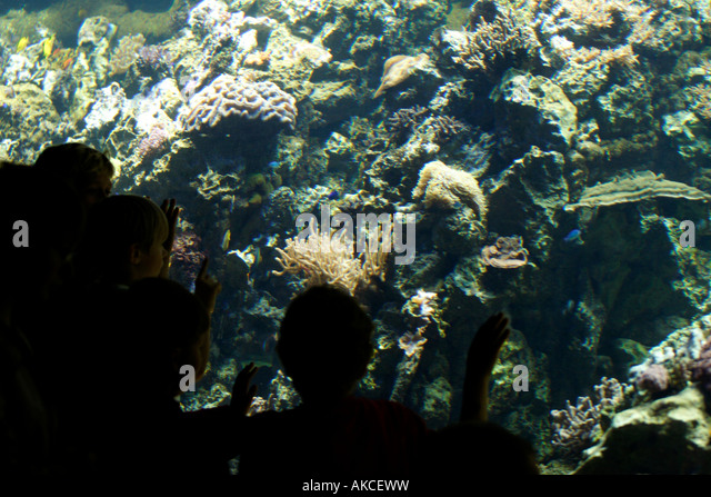 hagenbeck aquarium hotel