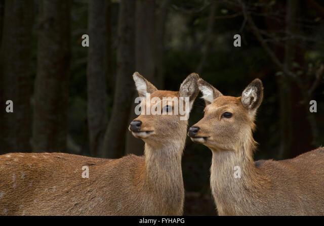 buddhist single women in deer isle 100% free online dating in deer isle 1,500,000 daily active members.