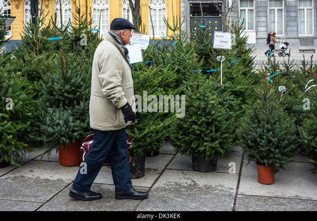 elderly man shopping for a christmas tree on xmas trees market in winter stock image - Christmas Tree Market