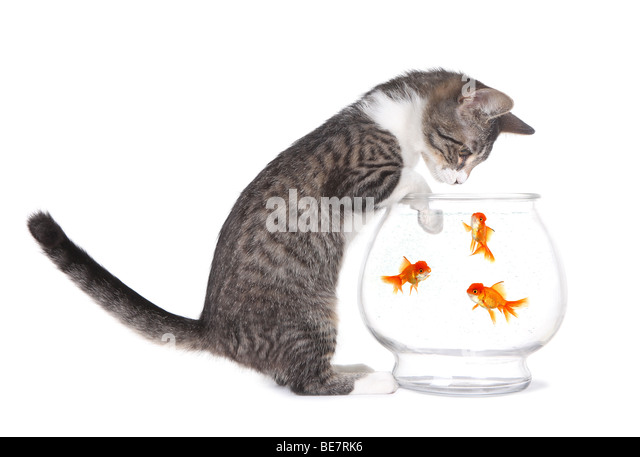 Adorable animal stock photos adorable animal stock for Swimming fish cat toy