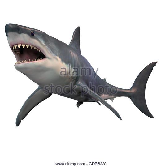 shark fin white background - photo #23
