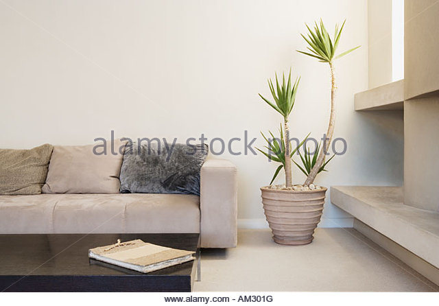 Indoor plant stock photos indoor plant stock images alamy for Modern living room plants