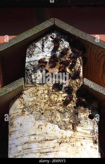 Make A Bird Box Stock Photos Amp Make A Bird Box Stock