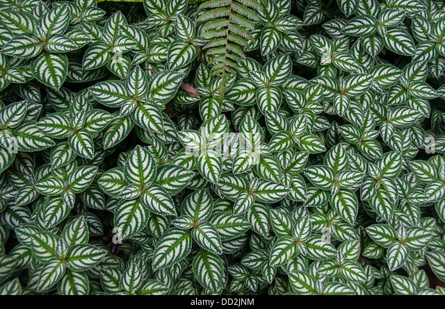 The Jungle Floor Displays Patterns Of Leafy Greenery.   Stock Image