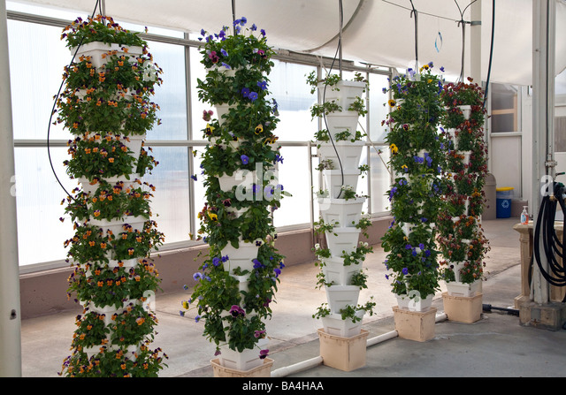 fruit and hydroponics Terrific tomatoes grown hydroponically or in  hydroponics tomatoes can taste as good as tomatoes grown in rich  fruit that puffs out more in one portion than.