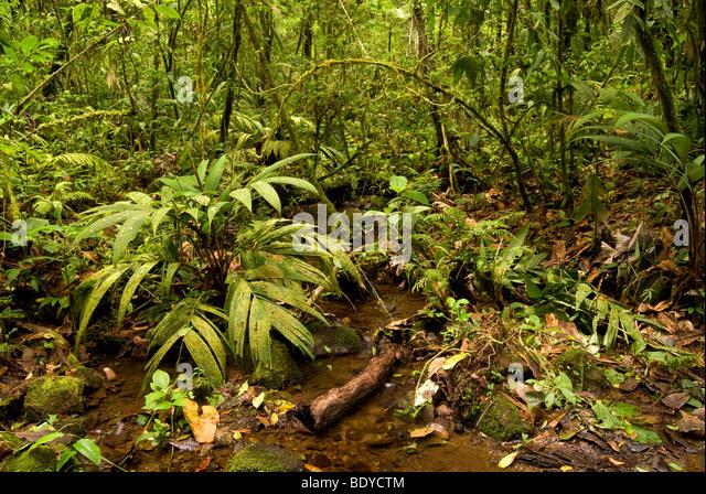 Floor Of Tropical Rainforest At Tenorio Volcano National Park, Costa Rica.    Stock Image