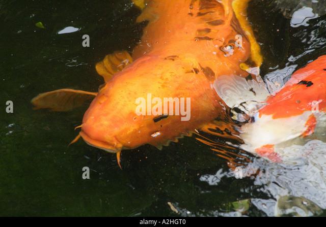 Ogon Stock Photos Ogon Stock Images Alamy