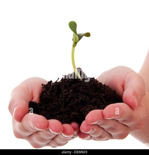 Soil hand white background stock photos soil hand white for Black garden soil
