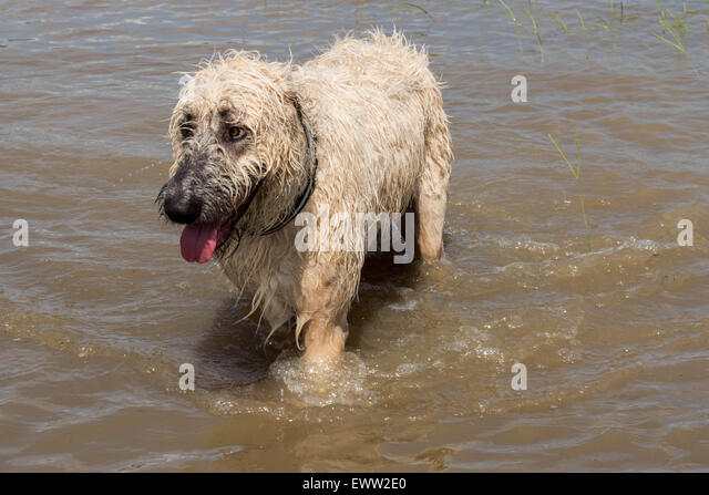 Dog In Deep Water Stoc...