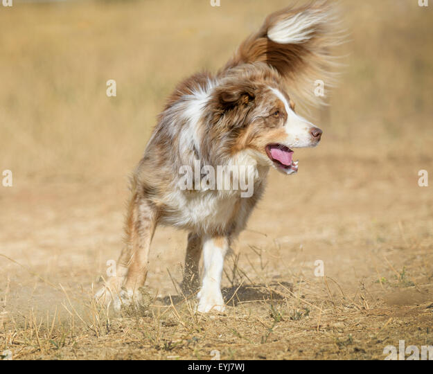 Mix Breed Stock Photos & Mix Breed Stock Images - Alamy