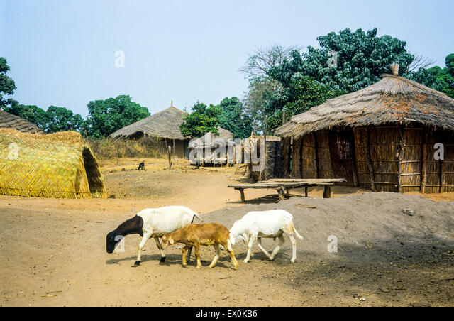 Gambia Village Juffure Stock Photos & Gambia Village ...  Gambia Village ...