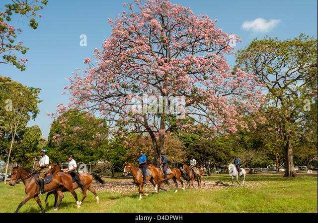 Port Of Spain Trinidad Tobago Stock Photos & Port Of Spain ...