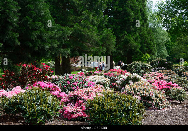 rhododendron park stock photos rhododendron park stock images alamy. Black Bedroom Furniture Sets. Home Design Ideas