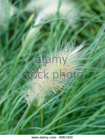 Ornamental Grasses Victoria Bc : Ornamental fountain stock photos