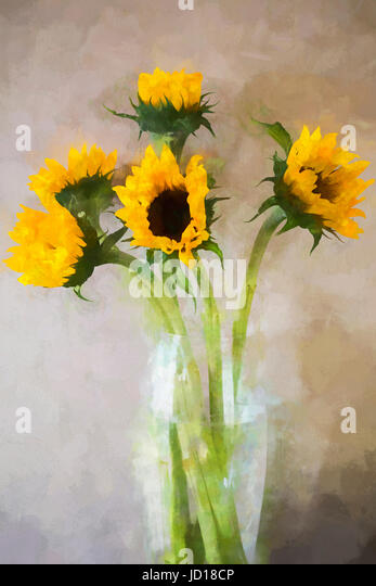 Sunflowers Vase Stock Photos Sunflowers Vase Stock Images Alamy