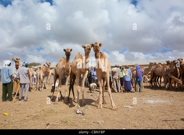 Hargeisa Stock Photos and Pictures | Getty Images