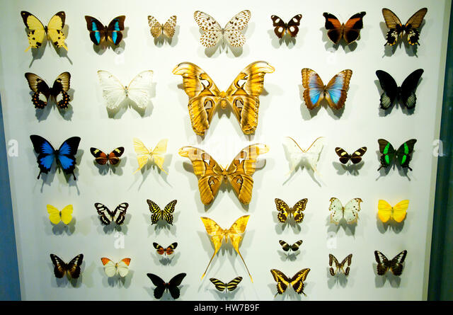 butterfly specimens stock image