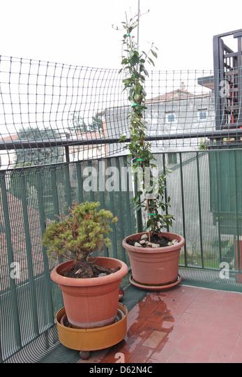 Jasmine Terrace: Potted Jasmine Plant Stock Photos & Potted Jasmine Plant