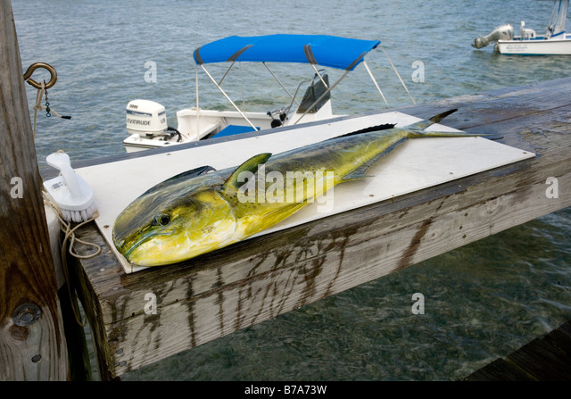dolphin cutting board dolphin cay stock photos dolphin cay stock images alamy