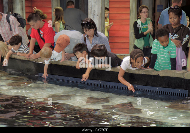 Asian american teen parents stock photos asian american Georgia aquarium volunteer