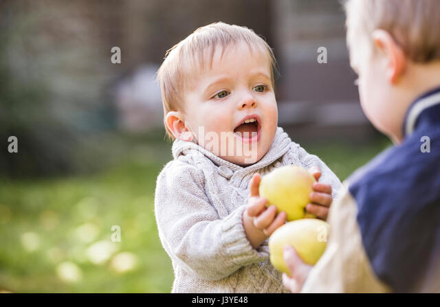 two toddler boys playing with apples in the garden - Stock Image