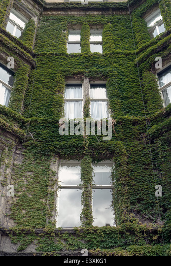 Green ivy growing up wall stock photos green ivy growing for 4 rothesay terrace edinburgh