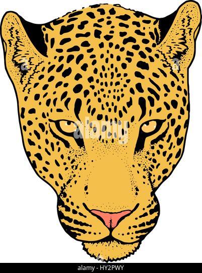 jaguar face illustration - photo #13
