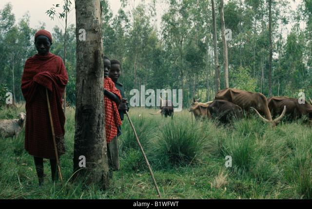 cattle people in east africa 2002-4-11  gene study traces cattle herding in africa   first domesticated in the near east, were imported into africa  in many parts of africa, people herded cattle.