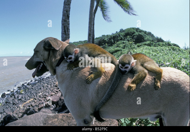 Chien Stock Photos & Chien Stock Images - Alamy