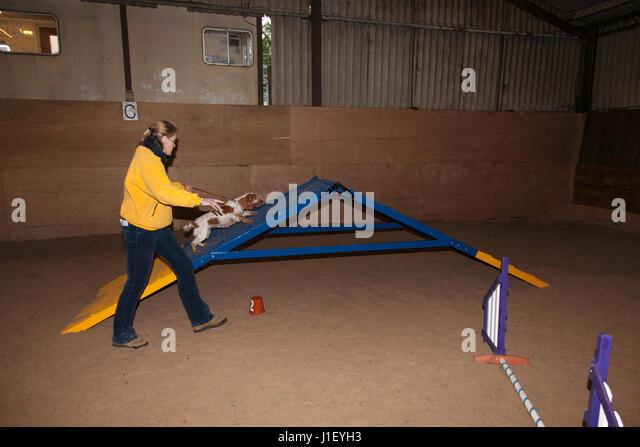 Dog Agility Training Orange County