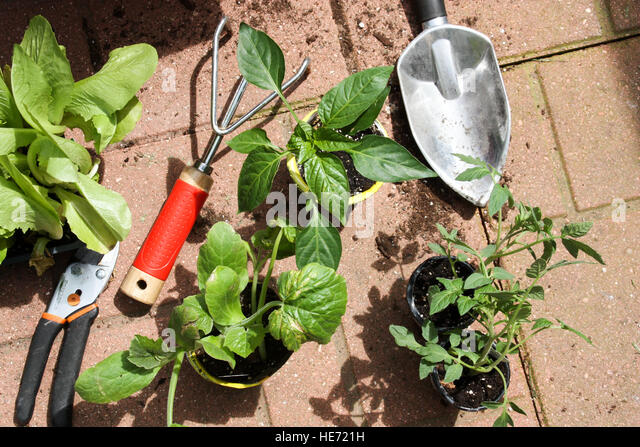 Vegetable Plants Ready To Be Planted In Container Garden With Trowel And  Gardening Tools   Stock