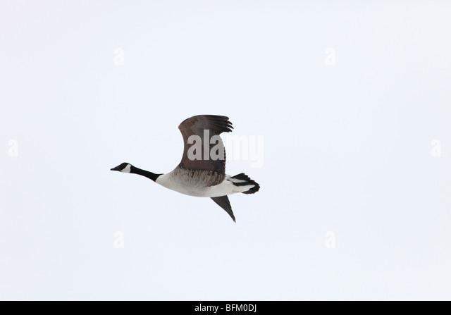 northern industrial sales canada goose