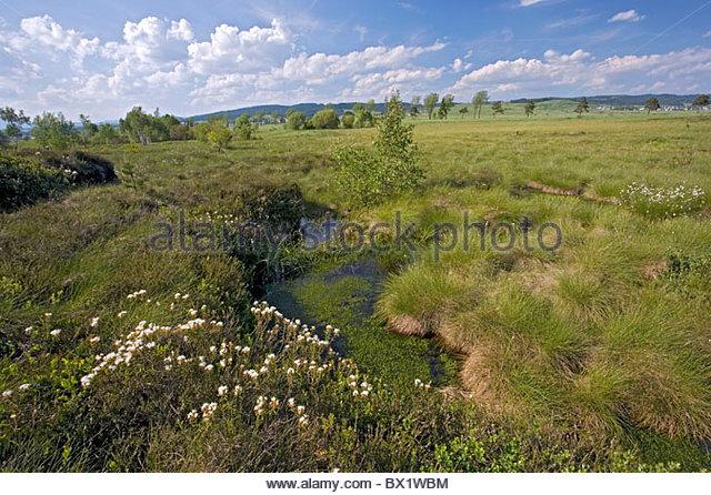 Tea shrub stock photos amp tea shrub stock images alamy