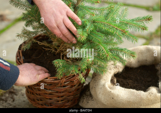 Root Ball Stock Photos & Root Ball Stock Images