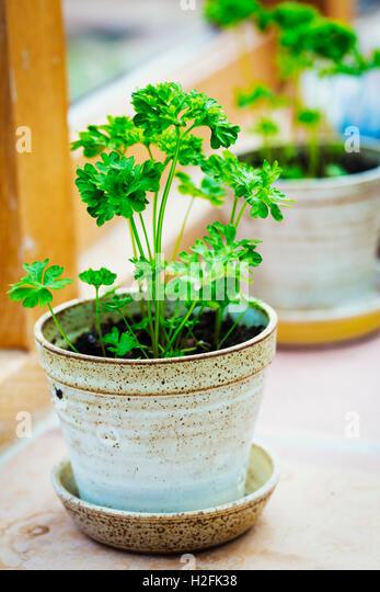 Windowsill Herbs Stock Photos Windowsill Herbs Stock