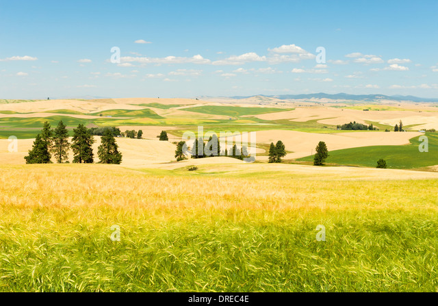 Kamiak Butte, Palouse - Address, Hours, Tours, Ticket Price, Reviews, Images