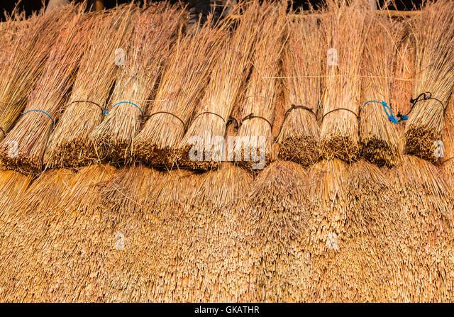 Thatching Grass Stock Photos Amp Thatching Grass Stock