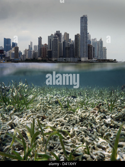 Coral Reef Destruction Stock Photos & Coral Reef ...
