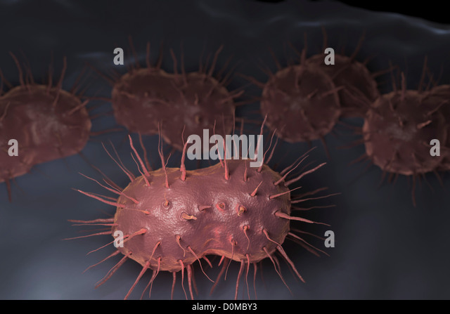 Gonorrhea Stock Photos & Gonorrhea Stock Images - Alamy