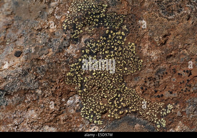 how to grow moss on rocks