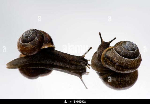 Snails St Pete Beach