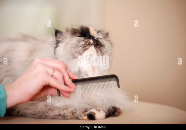 Grooming combs for persian cats