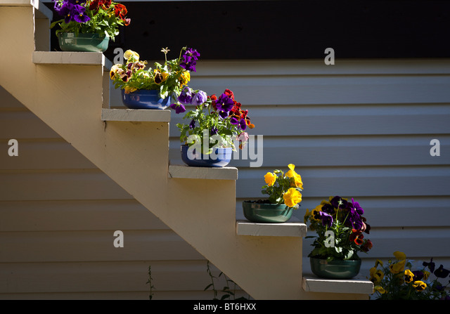 Flowers Pots Staircase Stock Photos Flowers Pots Staircase Stock