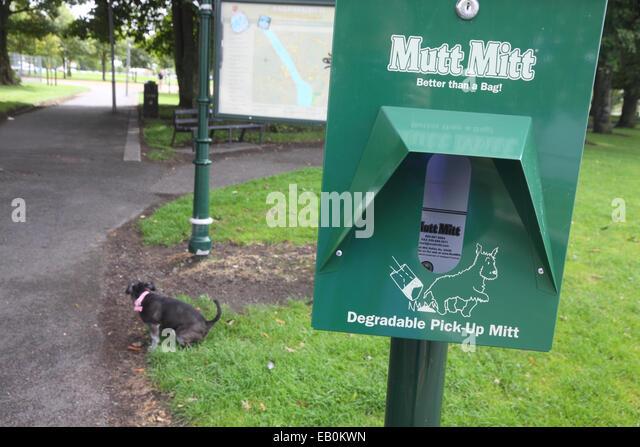 Gogo Walking Dog Australia