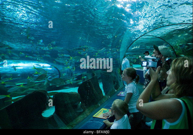 Ripleys Aquarium South Carolina Stock Photos Ripleys