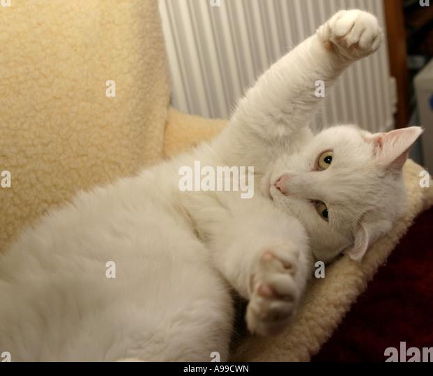 cat on a radiator hammock cradle   stock image cat on a radiator stock photos  u0026 cat on a radiator stock images      rh   alamy