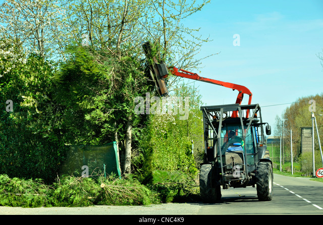 how to cut a hedge