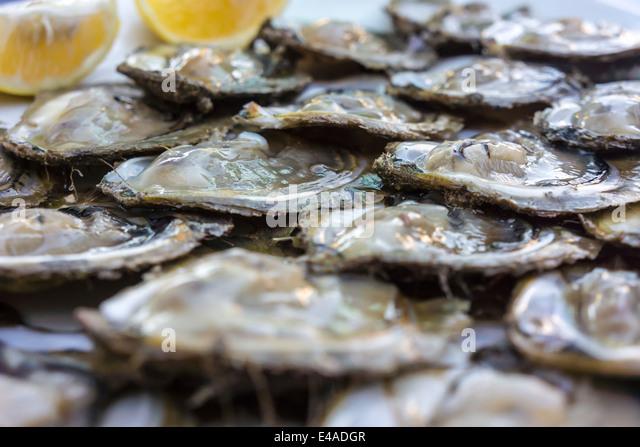 croatia-peljesac-mali-ston-fresh-oysters