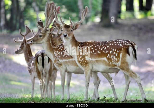 Proie stock photos proie stock images alamy for Parc animalier yvelines
